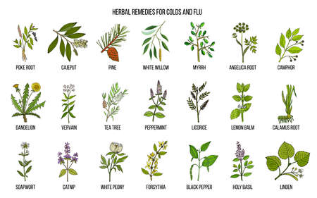 Ilustración de Collection of natural herbs for colds and flu - Imagen libre de derechos