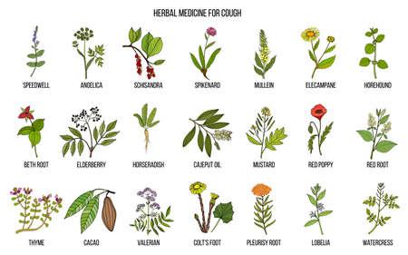 Ilustración de Natural herbs for cough remedies. Hand drawn botanical vector illustration - Imagen libre de derechos
