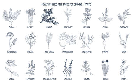 Illustrazione per Hand drawn set of culinary herbs and spices illustration. - Immagini Royalty Free