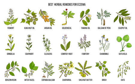 Illustration for Best medicinal herbs for eczema. Hand drawn vector set of medicinal plants - Royalty Free Image