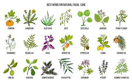 Ilustración de Best medicinal herbs for natural facial care - Imagen libre de derechos