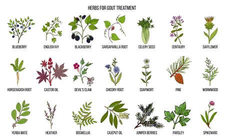Ilustración de Collection of natural herbs for gout treatment - Imagen libre de derechos