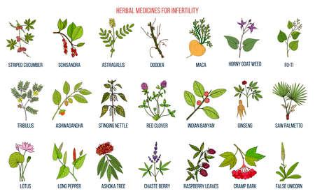 Ilustración de Best herbs for infertility - Imagen libre de derechos