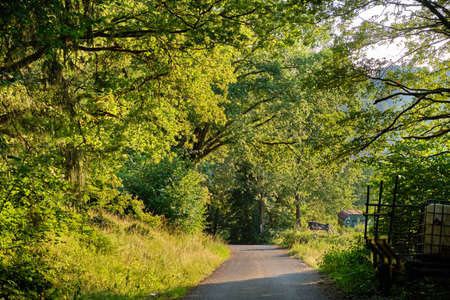 Foto de Idyllic rural evening landscape in the Spessart with a road and trees along near Bard Orb, Germany - Imagen libre de derechos