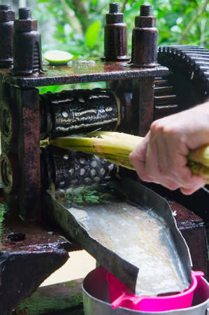 Sugar cane press making fresh cane juice
