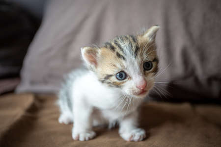 Photo pour tabby kitten looking at camera - image libre de droit
