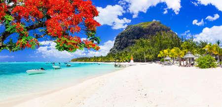Foto de Beautiful Le Morne beach with traditional tree,Mauritius island. - Imagen libre de derechos