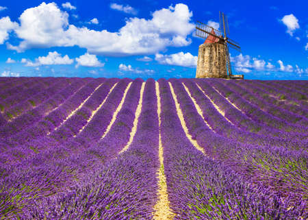 Photo for Impressive landscape, blooming lavander fields in Provance, France. - Royalty Free Image
