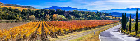 Photo pour Beautiful colored fields and vineyards, Tuscany, Italy. - image libre de droit