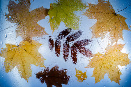 Fallen autumn leaves of maple, oak and ash over the wet droplets covered glass