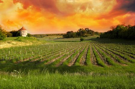Photo pour Vineyards of Saint Emilion, Bordeaux Vineyards - image libre de droit