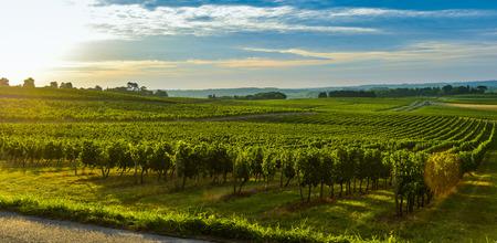 Photo for Vineyard Sunrise - Bordeaux Vineyard-France  - Royalty Free Image