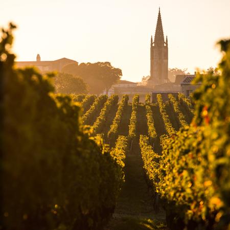 Photo for Saint Emilion, Vineyard Sunrise, Bordeaux Wine, France - Royalty Free Image