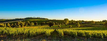 Photo pour Sunset landscape bordeaux wineyard france, europe Nature - image libre de droit