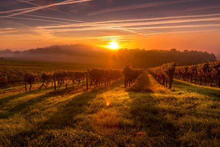 Photo pour Beautiful Sunset landscape bordeaux wineyard france europe - image libre de droit