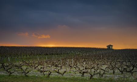 Photo pour Beautiful sunset landscape bordeaux wineyard, Medoc, france europe - image libre de droit