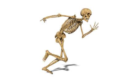 Photo pour Funny skeleton running, human skeleton exercising on white background, 3D rendering - image libre de droit