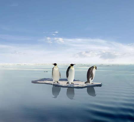 The last penguin survivers.