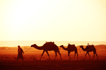 Photo pour Caravan of camels in Sahara desert, Morocco. Driver-berber with three camels dromedary on sunrise sky background - image libre de droit