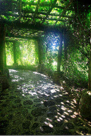 Photo for Alley in plants in Altos de Chavon, Dominican Republic - Royalty Free Image