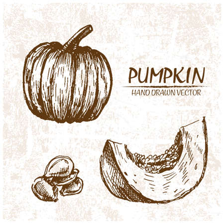 Digital vector detailed pumpkin hand drawn retro illustration collection set. Thin artistic linear pencil outline. Vintage ink flat style, engraved simple doodle sketches. Isolated objects