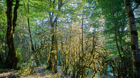 Photo for Moss in forest. Sunlight in the branches of trees. Sochi - Royalty Free Image