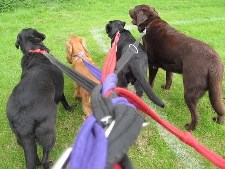 Photo for Dog Walking I - Royalty Free Image