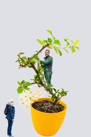 Abstract, woman and man with bonsai tree. A small bonsai tree in a yellow ceramic pot. Isolated on white background.