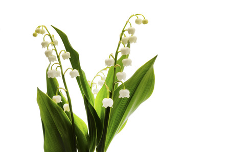 Photo pour  Lily of valley flower on white background - image libre de droit