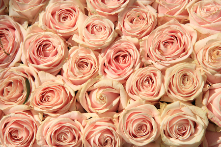 Foto de Pink roses in a wedding flower arrangement - Imagen libre de derechos