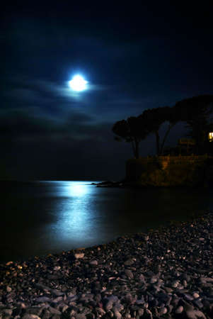 Moon is shining over the calm sea. Silhouette of trees are visible