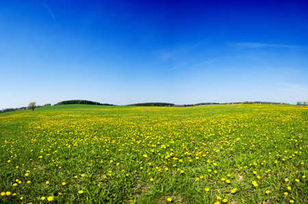 Photo pour Beautiful spring panoramatic shot with a dandelion meadow - image libre de droit