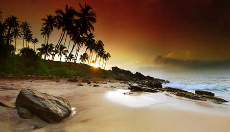 Photo pour Extremely beautiful vivid sunrise under the coconut plams on Sri Lanka beach. Panoramic photo - image libre de droit