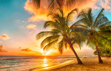 Photo pour Beautiful sunset over the sea with a view at palms on the white beach on a Caribbean island of Barbados - image libre de droit