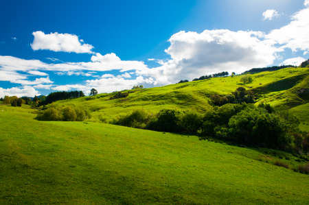 Photo pour Beautiful green rolling hills of Southern New Zealand at dusk, Canterbury - image libre de droit
