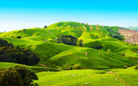 Photo pour Beautiful green hills covered by grass and with many sheep on the pasture - image libre de droit
