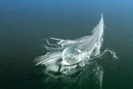 Foto de Drop of water on white feather - Imagen libre de derechos