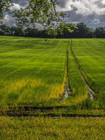 Photo for Around the Dark Hedges - Ballymoney, Northern Ireland - Royalty Free Image
