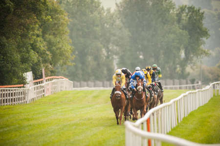 Photo for horse race coming down the track - Royalty Free Image
