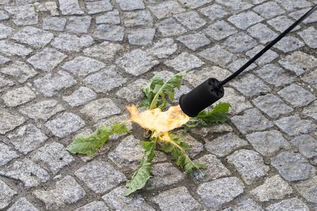 Foto de close up of thermal weed control with flame, selective focus - Imagen libre de derechos