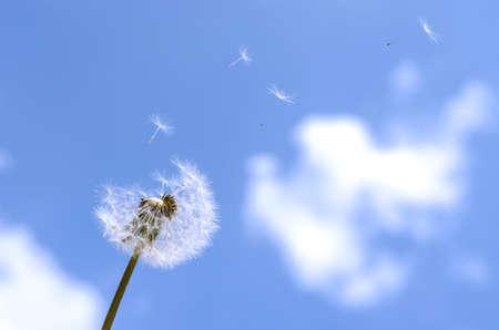 Foto de Blown dandelion on a blue sky. - Imagen libre de derechos