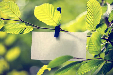 Photo pour Blank white note paper hanging in between green leaves on a sunlit tree attached to the twig by a clothes peg - image libre de droit