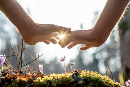 Foto de Close up Bare Hand of a Man Covering Small Flowers at the Garden with Sunlight Between Fingers. - Imagen libre de derechos