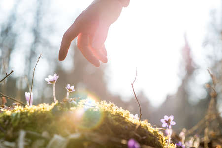 Photo pour Hand of a man above a blue flower back lit by the sun in a garden, suitable for business,  life and spirituality concepts. - image libre de droit