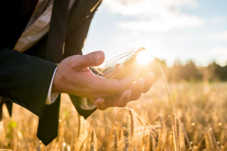 Photo pour Businessman cupping a ripe ear of wheat in his hands holding it in front of the fiery orb of the rising morning sun in a conceptual image, close up of his hands. - image libre de droit