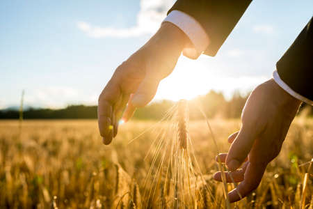 Photo pour Businessman holding his hands around an ear of wheat in an agricultural field backlit by the warm glow of the rising sun between his hands, suitable for business,  life and prosperity concepts. - image libre de droit
