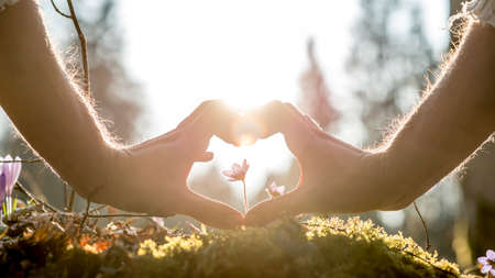 Photo pour Conceptual Human Hands Forming Heart Shape Around Small Flower Growing on Grassy Ground Against Blurry Trees and Sunlight. - image libre de droit