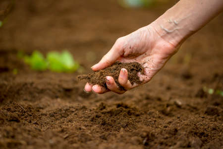 Foto de Close up of the hand of a woman holding a handful of rich fertile soil that has been newly dug over or tilled in a concept of conservation of nature and agriculture or gardening. - Imagen libre de derechos