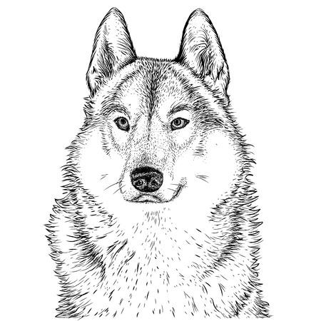 Illustration pour wolf - image libre de droit
