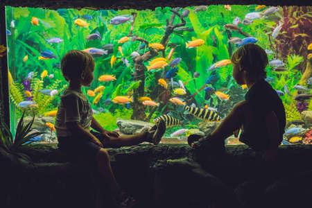 Photo pour Two boys look at the fish in the aquarium. - image libre de droit